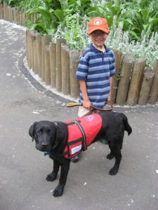 Rescue dogs (dressed in red uniform) trained to detect low blood sugar in diabetics. Picture source: http://www.alertservicedogs.com