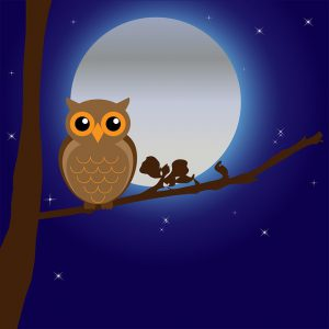 owl night sleep 300x300 - A Night Owl's Guide to Exercising in the Morning