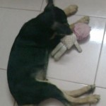 Bad doggie bitting my doll 150x150 - What to do if your dog is vomiting out food and appeared to be choking