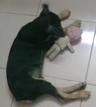 Bad-doggie-bitting-my-doll
