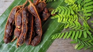 asamjava 300x169 - Bringing down fever with tamarind paste