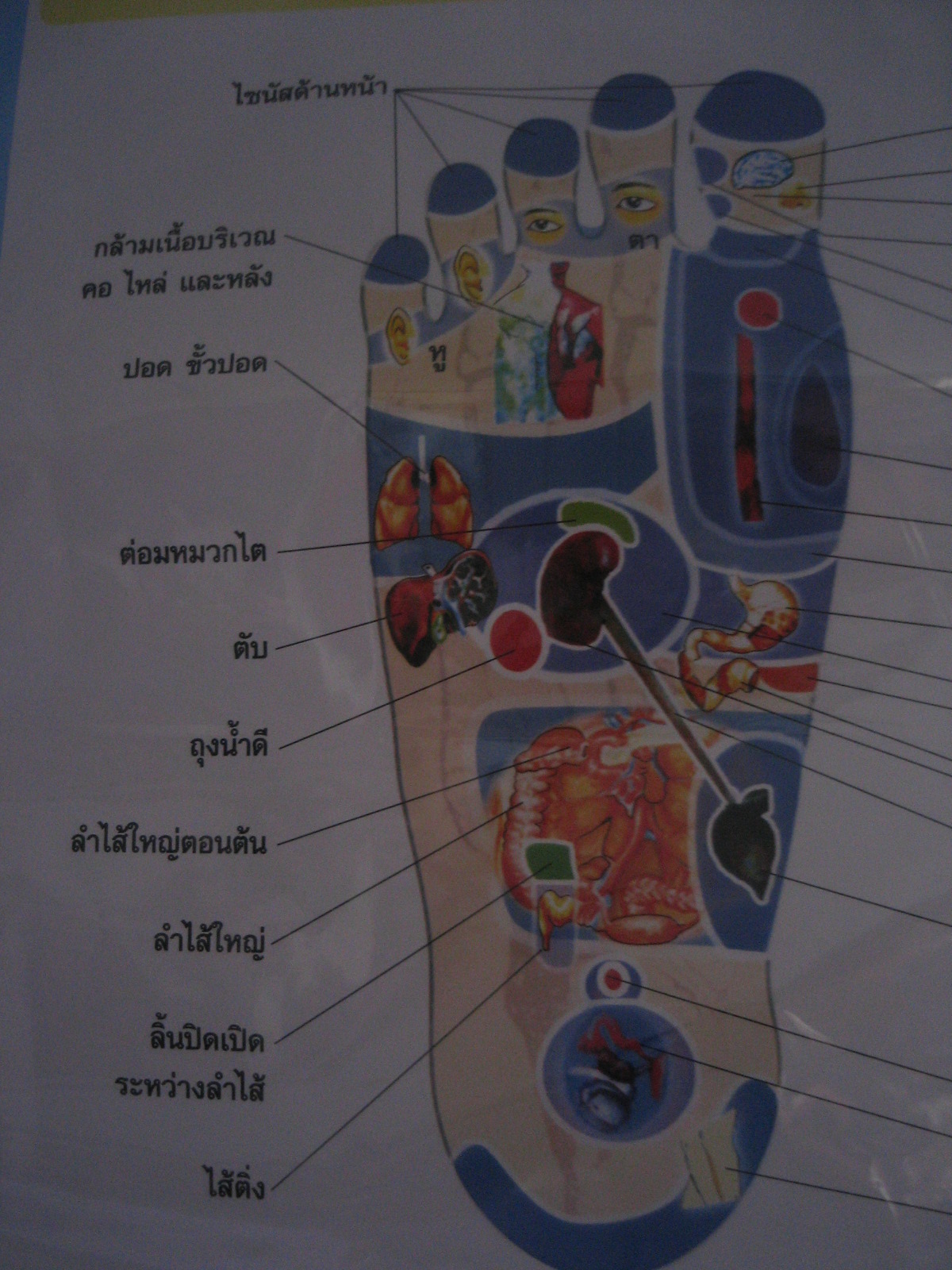 LeftFoot - Reflexology Chart of Various Parts of the Feet