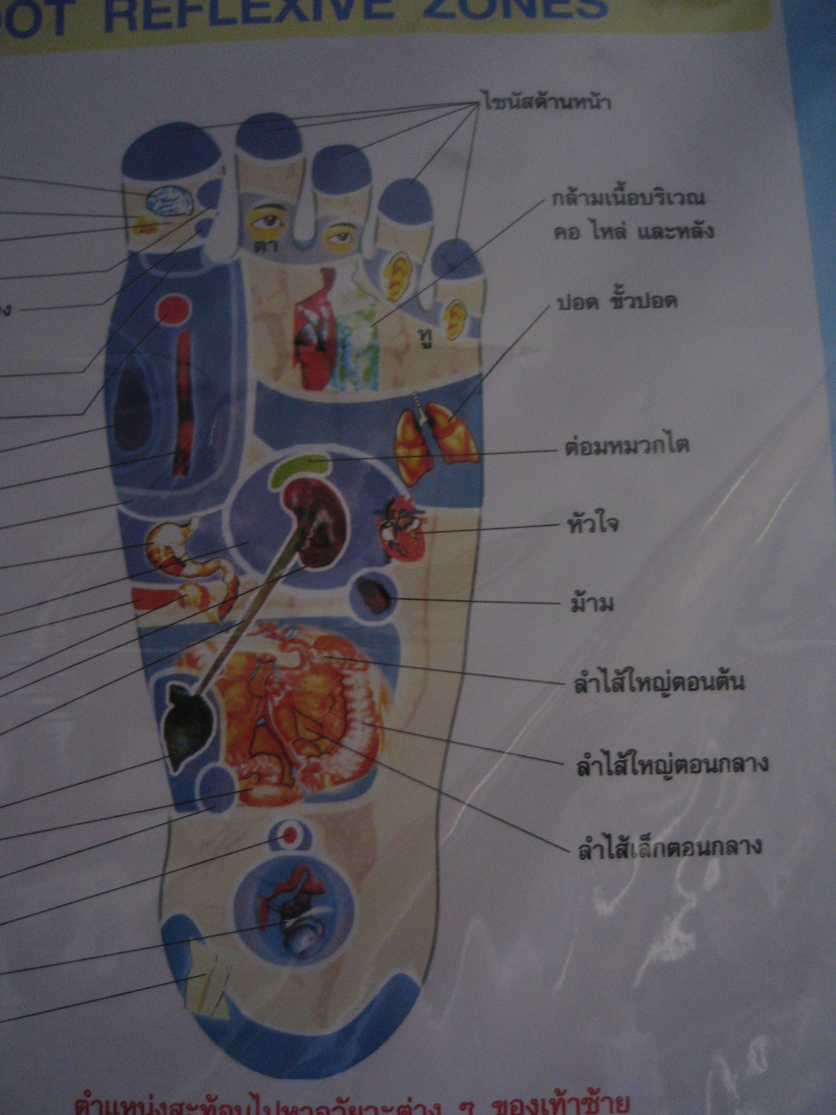 Reflexology Chart Of Various Parts Of The Feet