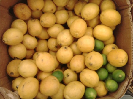 LemonsDiabetes