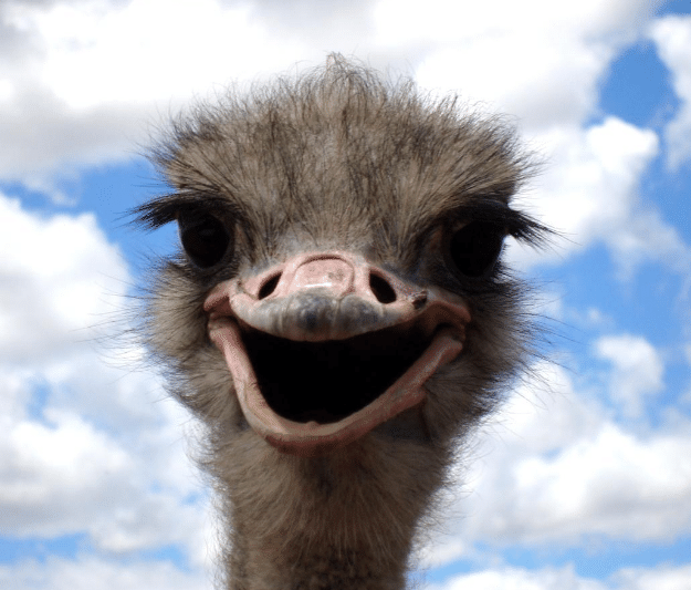 ostrich - Low IQ means nothing- do not let a score on paper get to you