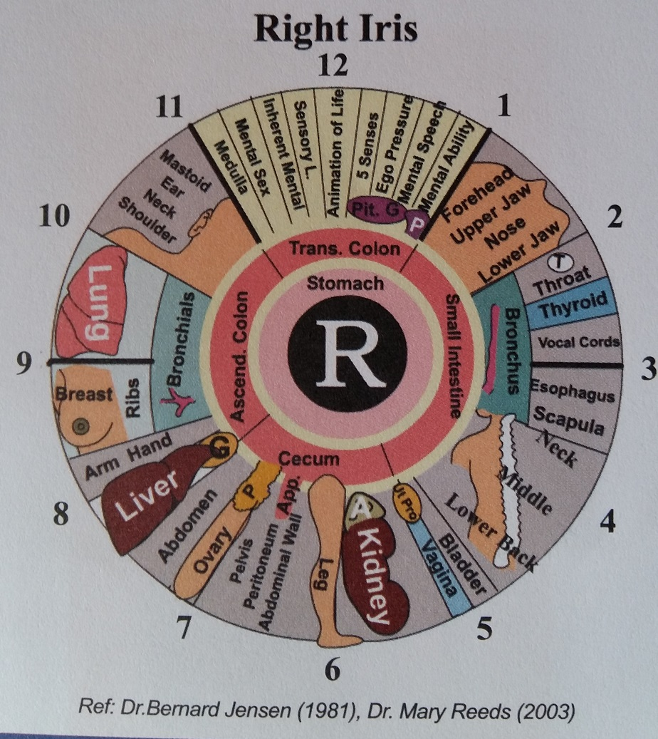 Iridology- right iris chart