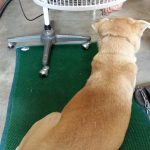 Acupuncture treatment for my dog