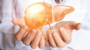 health category liver 300x169 - Liver