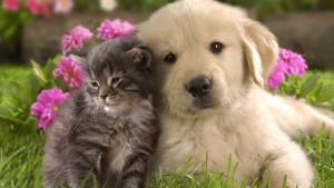 health category pets 300x169 - Pets